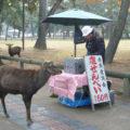 奈良マラソン2012・必死のパッチで応援
